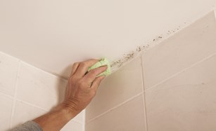 How to prevent mould with Anti Mould Paint