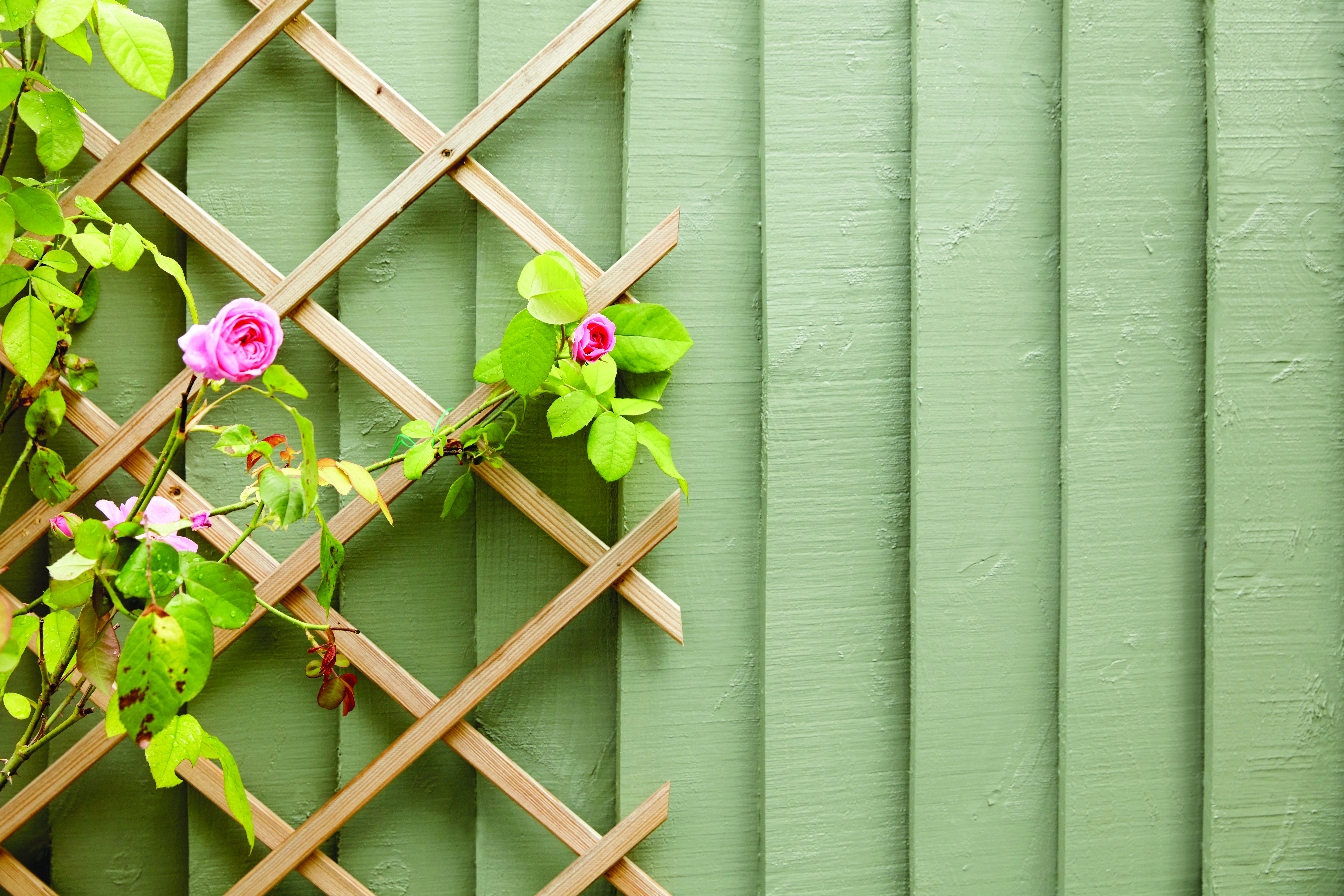 howto paint garden fence panels